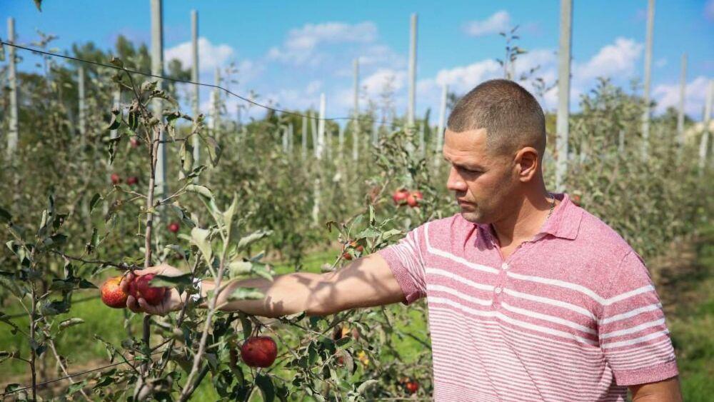 Больше, чем могли собрать: яблоневый суперсад в Крыму дал первый урожай