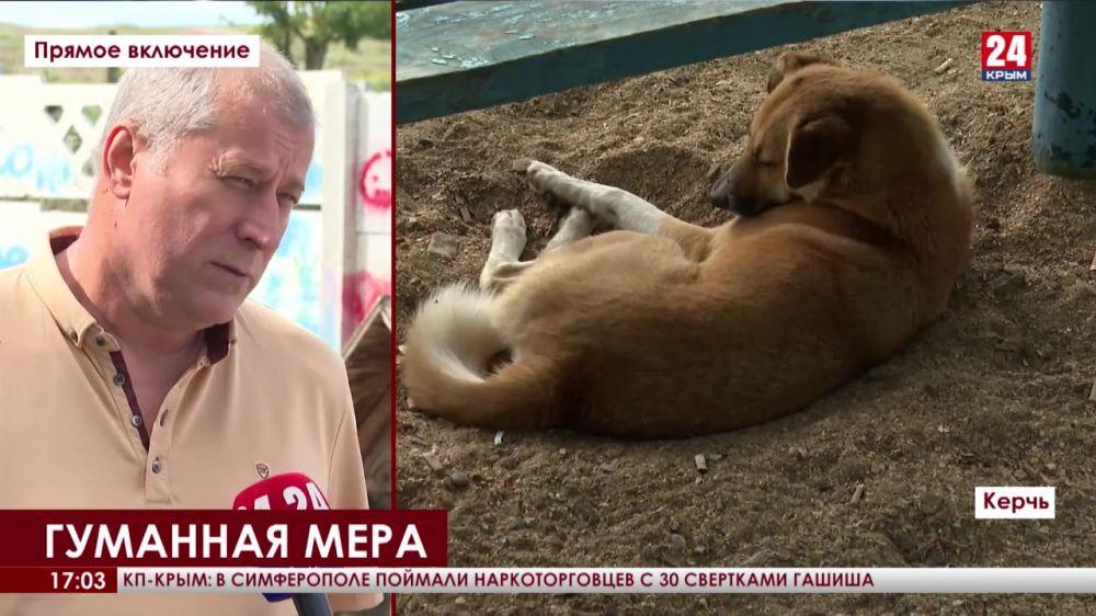 В Керчи и Ленинском районе взялись решать проблему бездомных животных