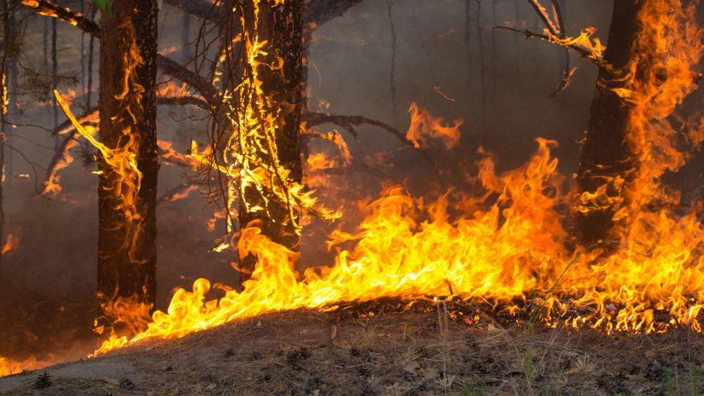 От стихии к стихии: что ждет Крым в пожароопасном сезоне?