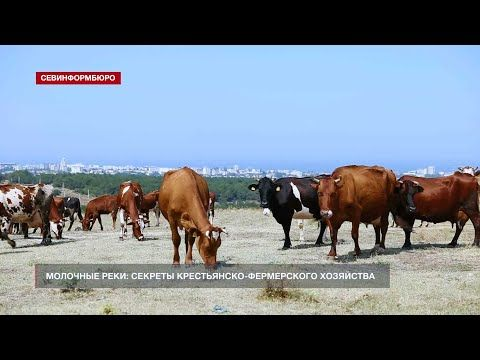 Молочные реки: секреты крестьянско-фермерского хозяйства