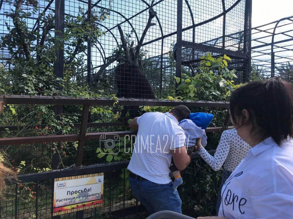 Детки и клетки. Безопасны ли вольеры с хищниками в сафари-парке, где ребёнок остался без пальца