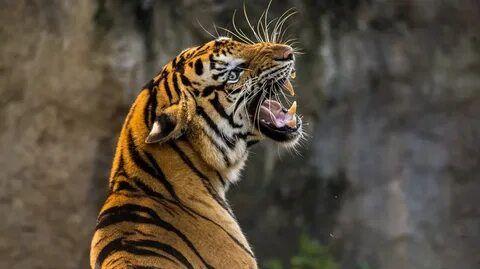 Пострадавшему от тигра в «Тайгане» ребенку пришлось ампутировать палец