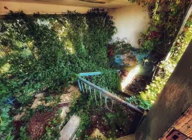 Царство растений: как сейчас выглядит заброшенный пионерлагерь близ мыса Казантип