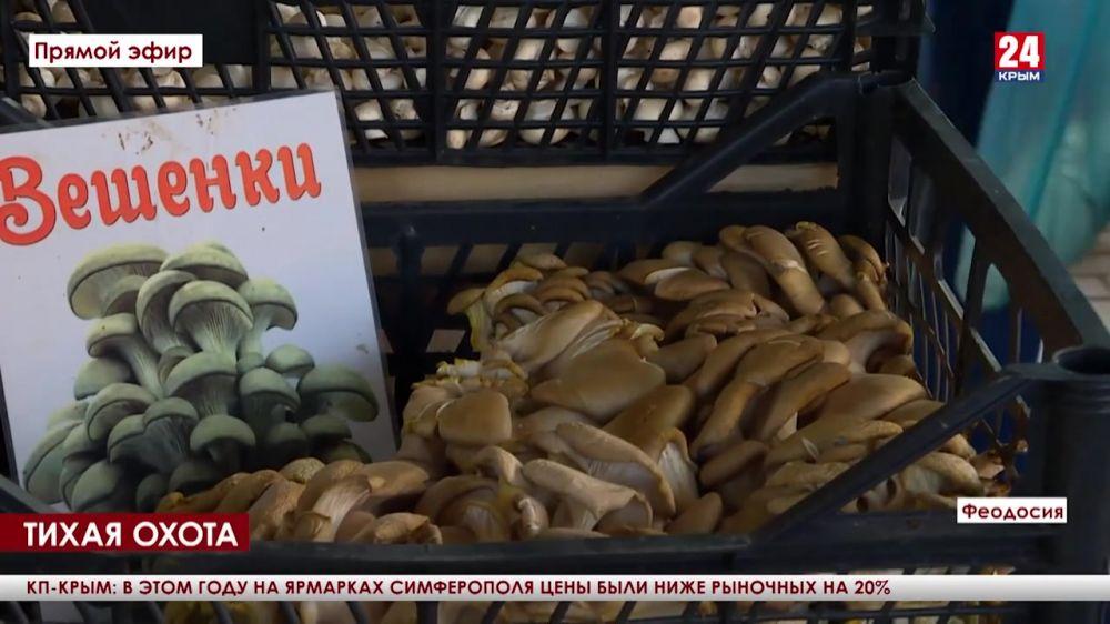 Тихая охота. После сентябрьских дождей на востоке Крыма начался грибной сезон