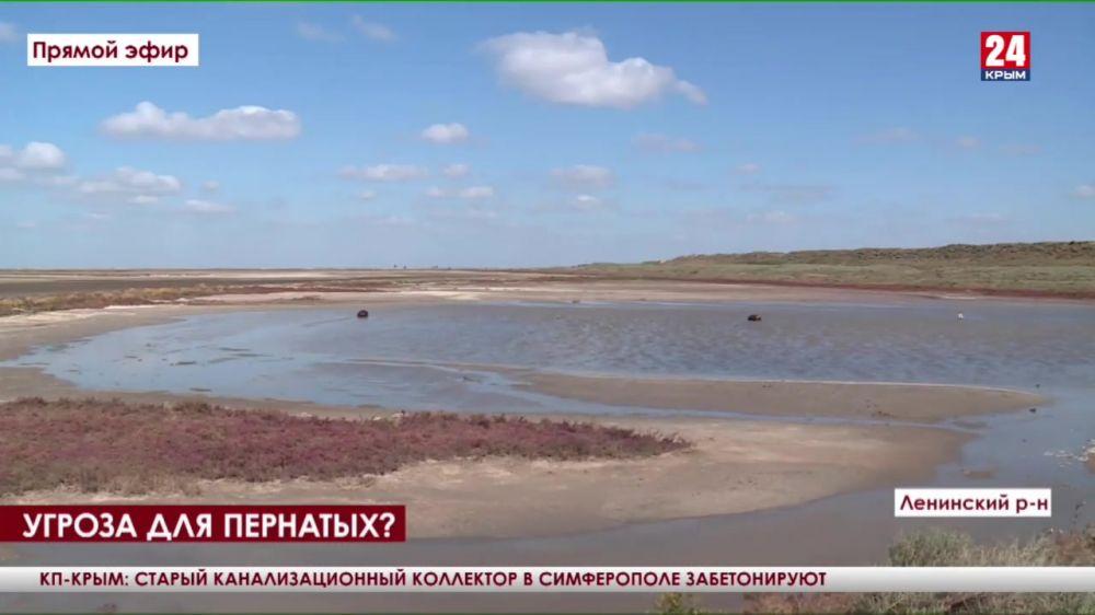 Угроза для пернатых? Экологи выясняют причины гибели птиц на озере Сиваш в Ленинском районе