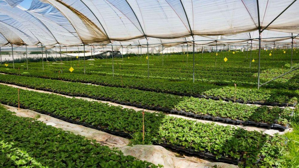 Россия вышла в лидеры по экспорту сельхозпродукции по итогам года