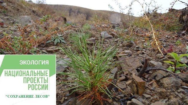Минприроды Крыма продолжает выполнение мероприятий регионального проекта «Сохранение лесов»