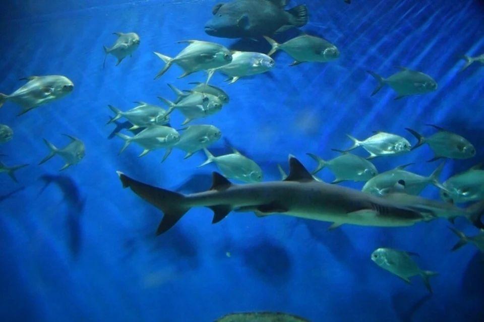 С 1 ноября начинает действовать запрет на рыбалку в Черном море