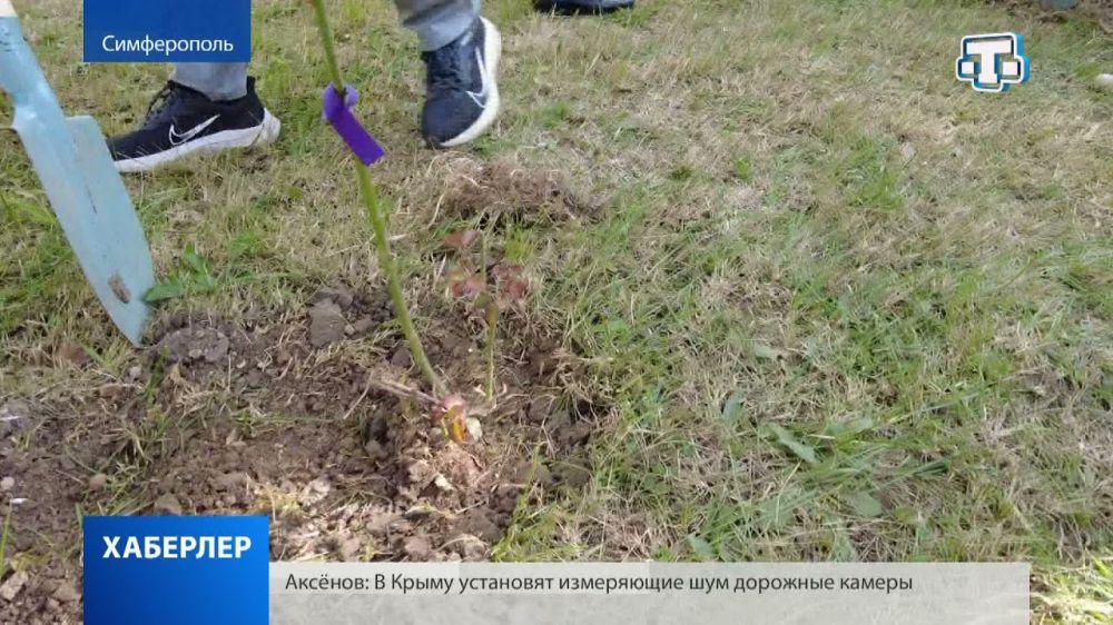 Акция «Цветы надежды» прошла в Симферополе