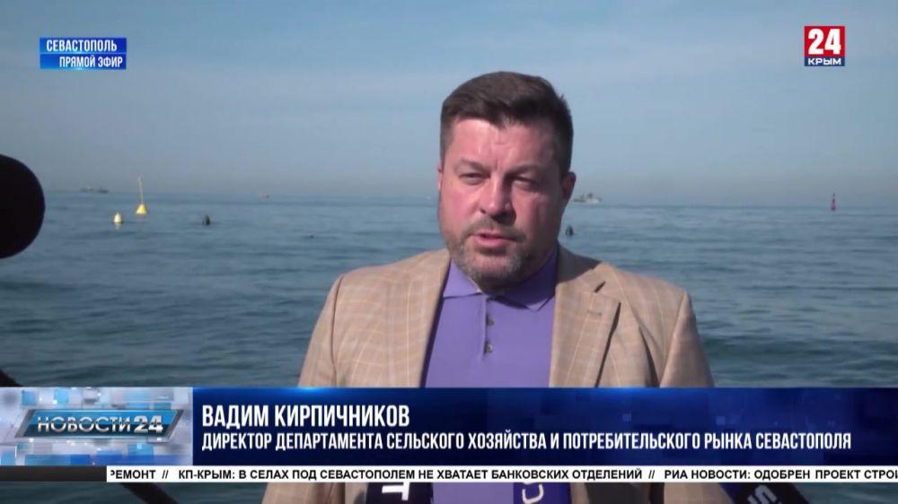 В Севастополе выросло производство мидий и устриц