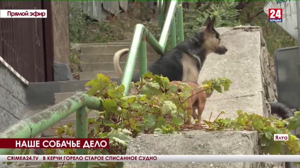 На Южнобережье оборудуют первое место для выгула собак