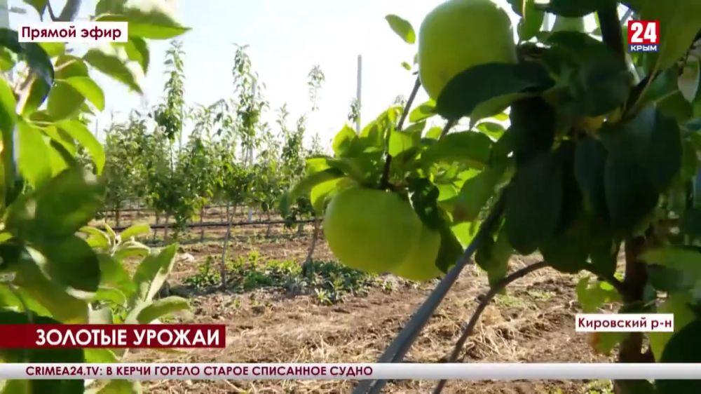 В Кировском районе собрали последний виноград и заканчивают работы в садах