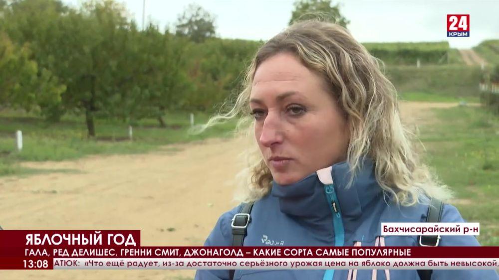 В Крыму – сбор яблок подходит к концу. Сколько тонн плодов соберут аграрии в этом году?