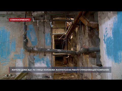 Мёртвые птицы и потоп в подвале: в Севастополе жители ул. Колобова жалуются на УК