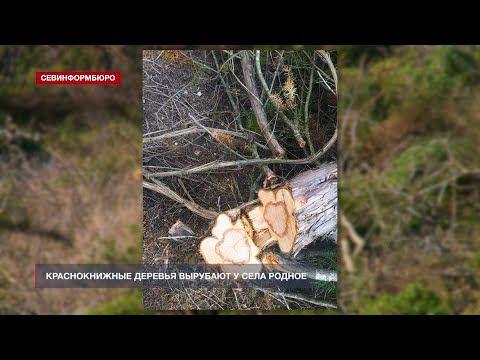 Более 100 экземпляров можжевельника уничтожены в районе села Родного