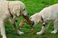 В Ялте благоустроят первую собачью площадку