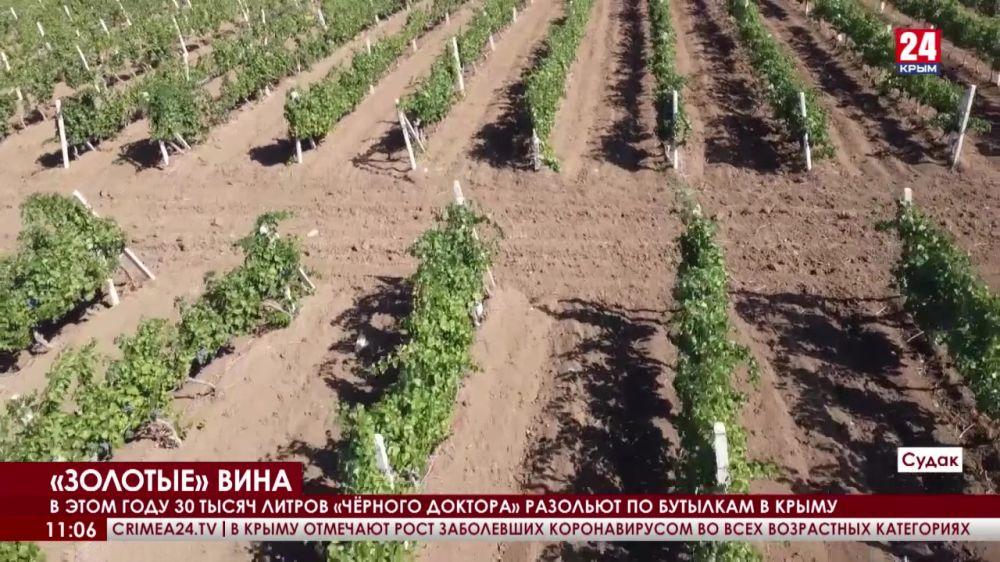 Крымские вина признали лучшими в России. В чём их особенность?