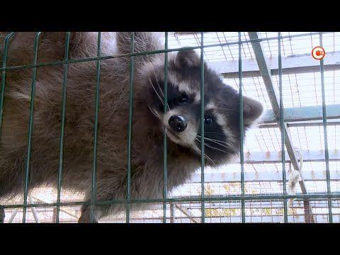 Обитатели закрывшегося севастопольского зоопарка не останутся без присмотра (СЮЖЕТ)