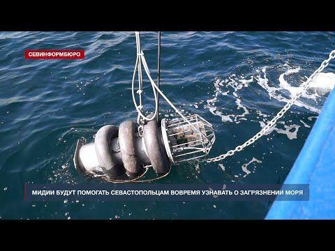 Севастополе изобрели аппарат для определения загрязнённости моря