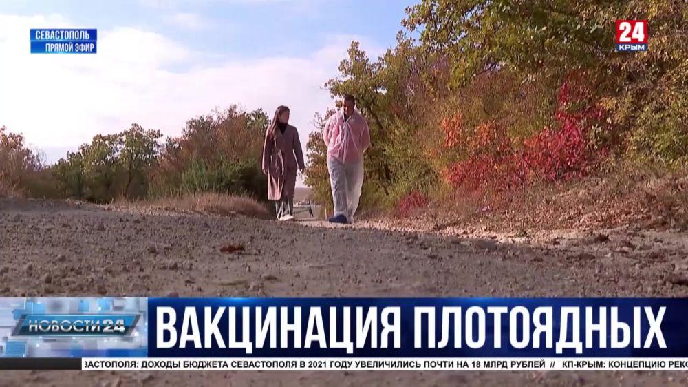 Как диких хищников Севастополя вакцинируют от бешенства?
