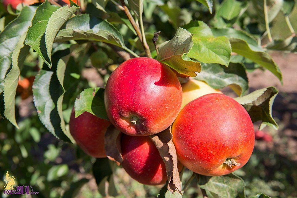 Яблоневый сад в цифровом формате
