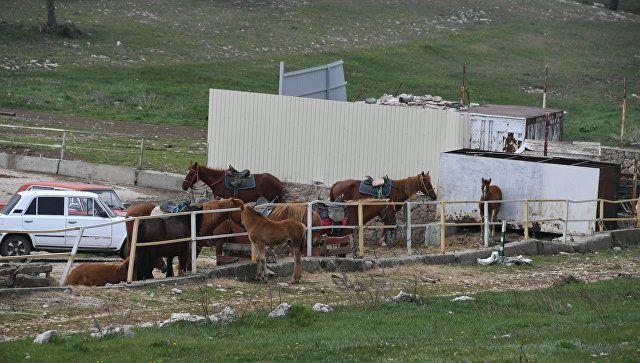 Лошади на плато Ай-Петри в Крыму