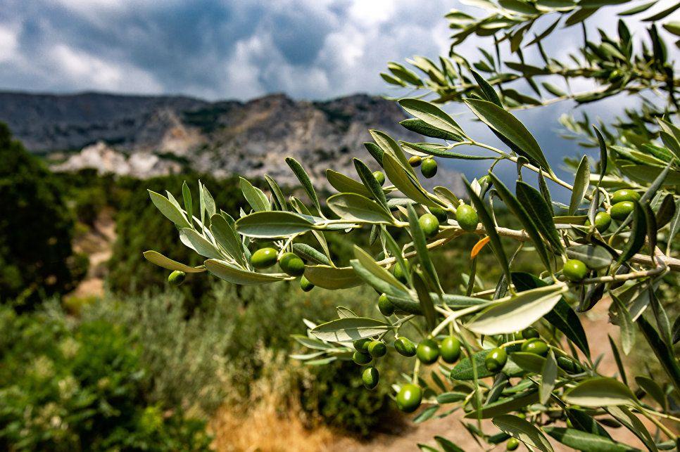 Крым поставит в Сирию пять тысяч тонн зерна в ближайшие месяцы