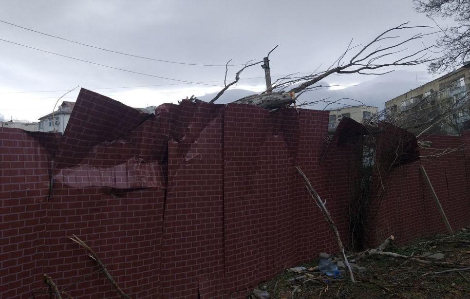В Крыму штормовой ветер валит деревья - фото