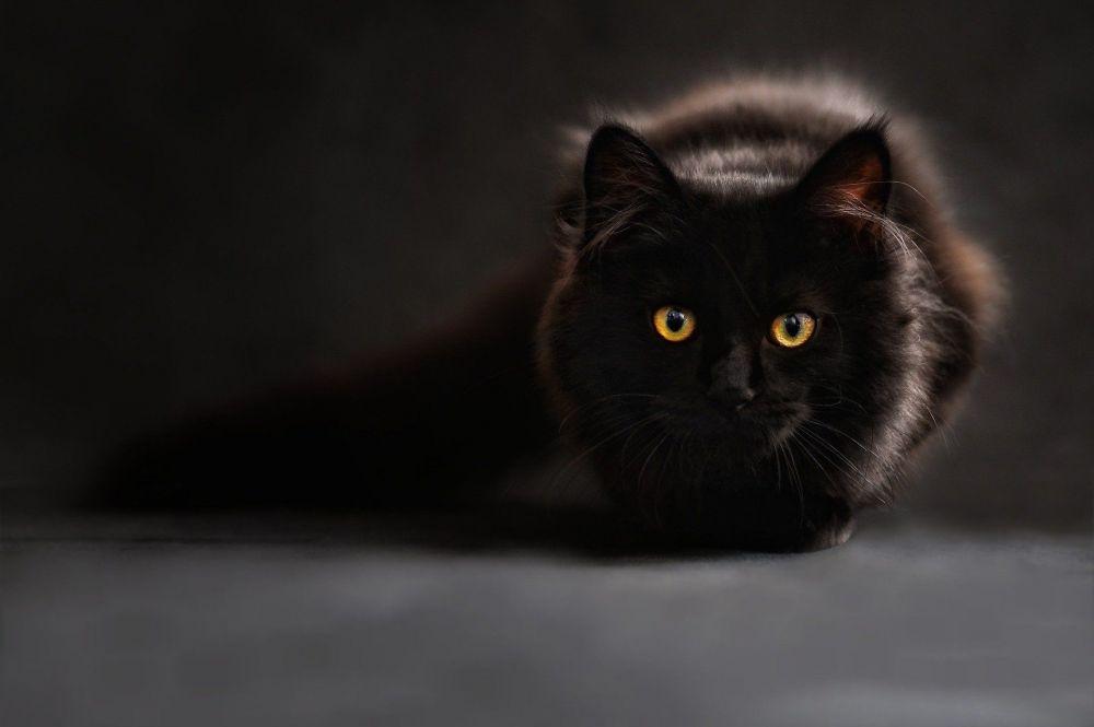 5 суперспособностей кошек: но любим мы их не за это