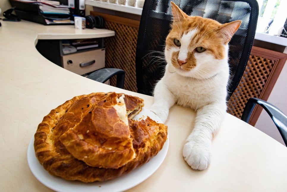 Как приготовить настоящее крымское кубэтэ: 7 секретов от кота Мостика