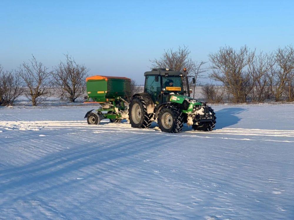 В Крыму аграрии начали подкармливать озимые культуры