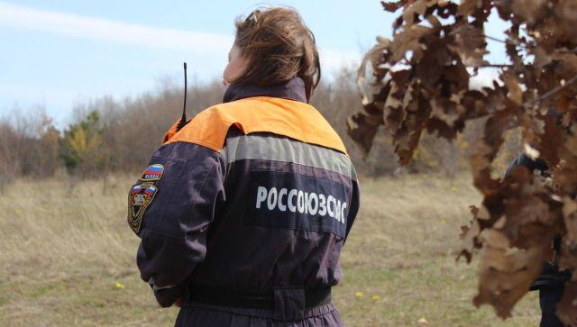 В Крым на кинологические сборы приехали собаки из разных регионов РФ