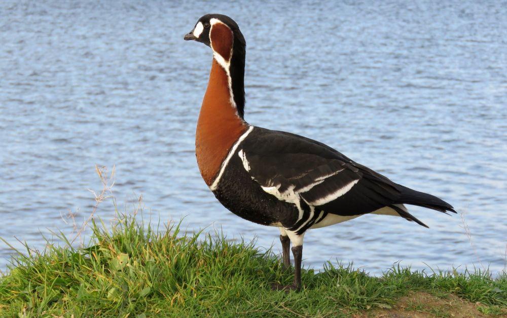 Как в Крыму живется перелетным птицам: миграции, зимовки, кочевки