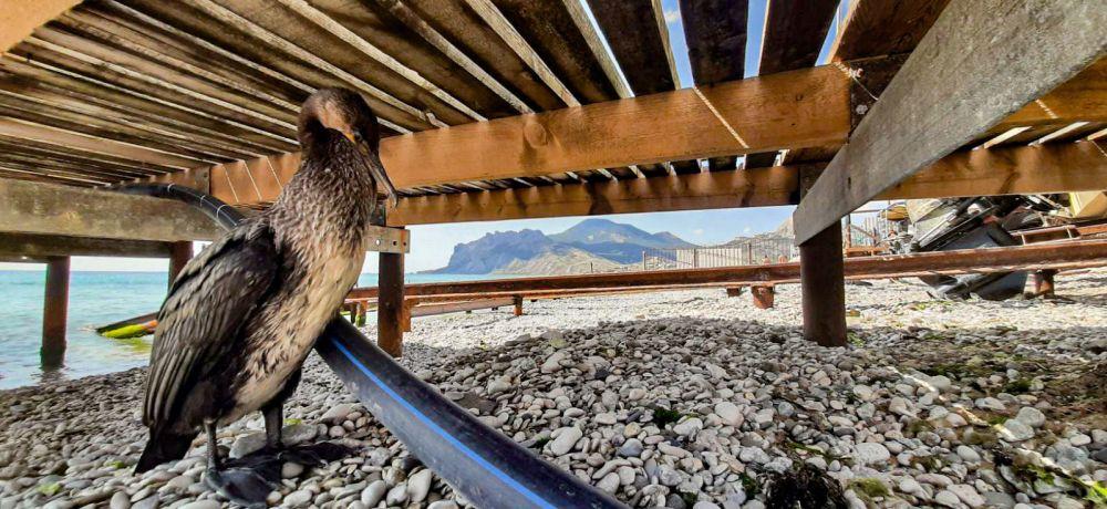 Степи, курганы, шашлык: кого тянет в юго-восточный Крым